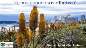 Durban-Zuid-Afrika - Nginesi Ponono